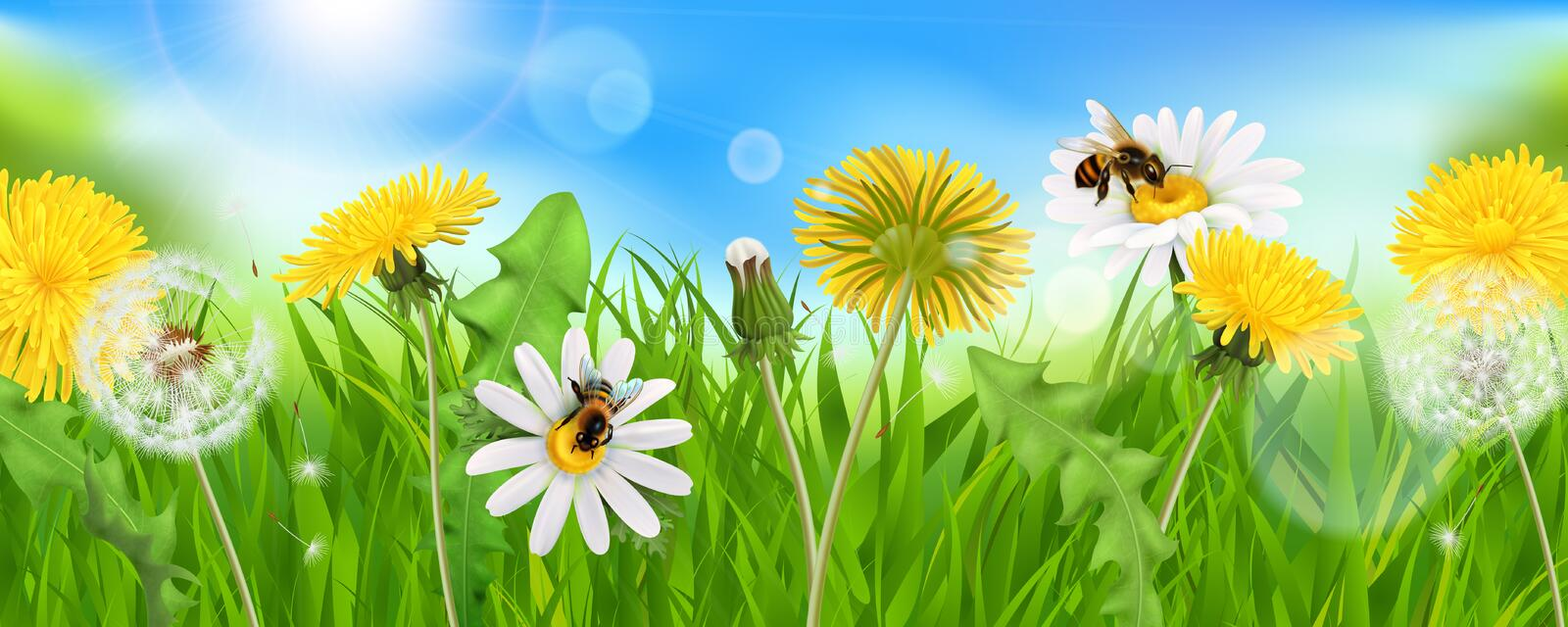 Spring Grass Dandelions Composition royalty free stock image