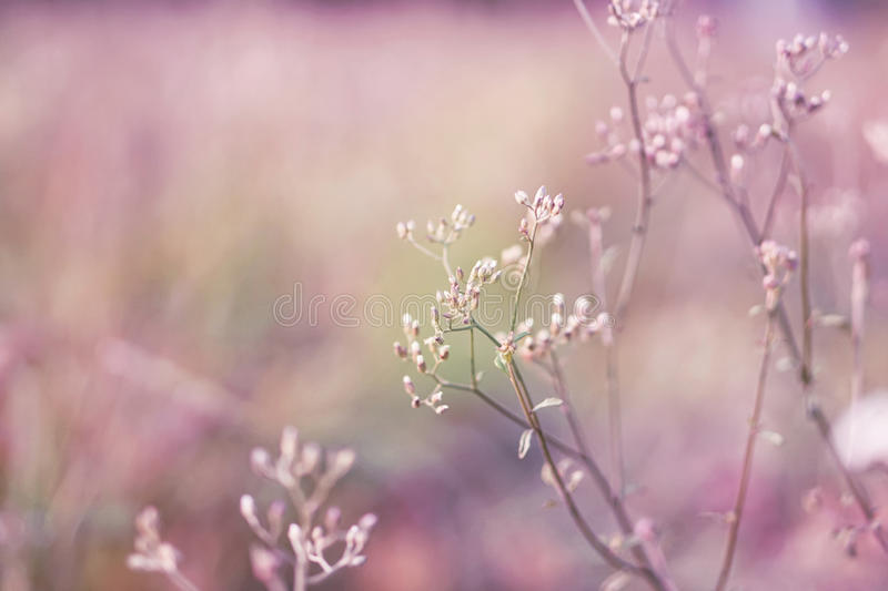 Spring grass flower field in soft purple and pink background stock photos