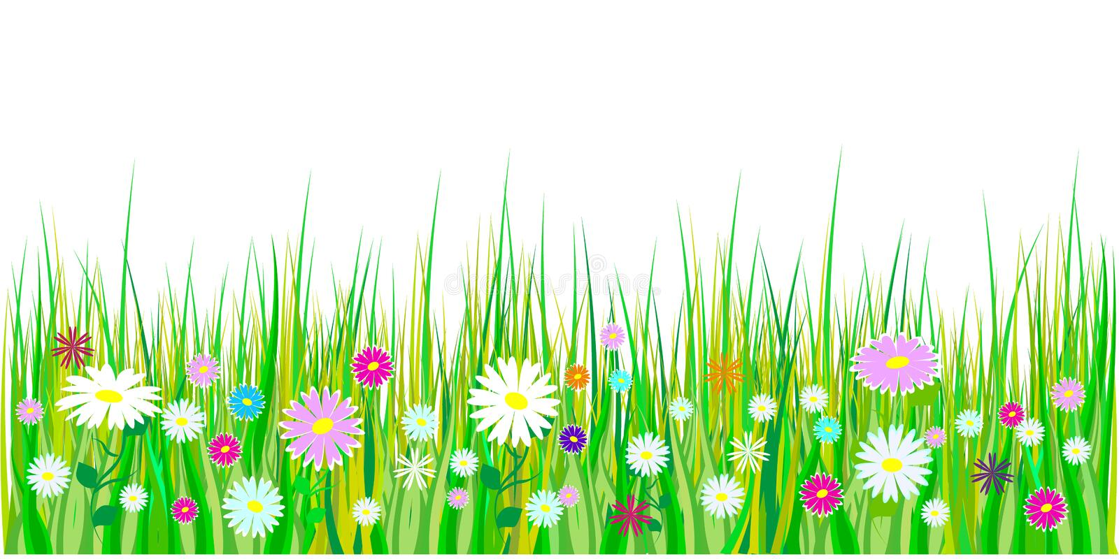Spring grass and flowers borders. Easter decoration with spring grass and meadow flowers. Isolated on white background. Vector royalty free illustration