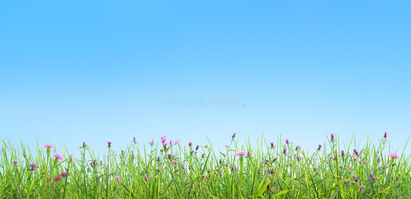 Spring grass and pink flowers natural background royalty free stock photography
