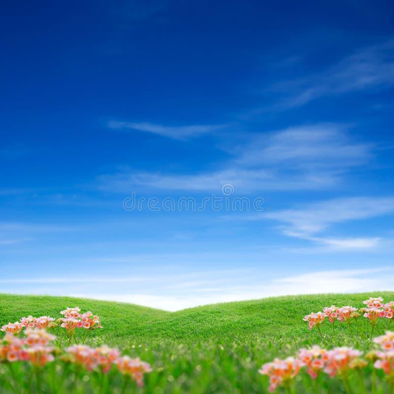 Spring Grass & Sky Stock Photos