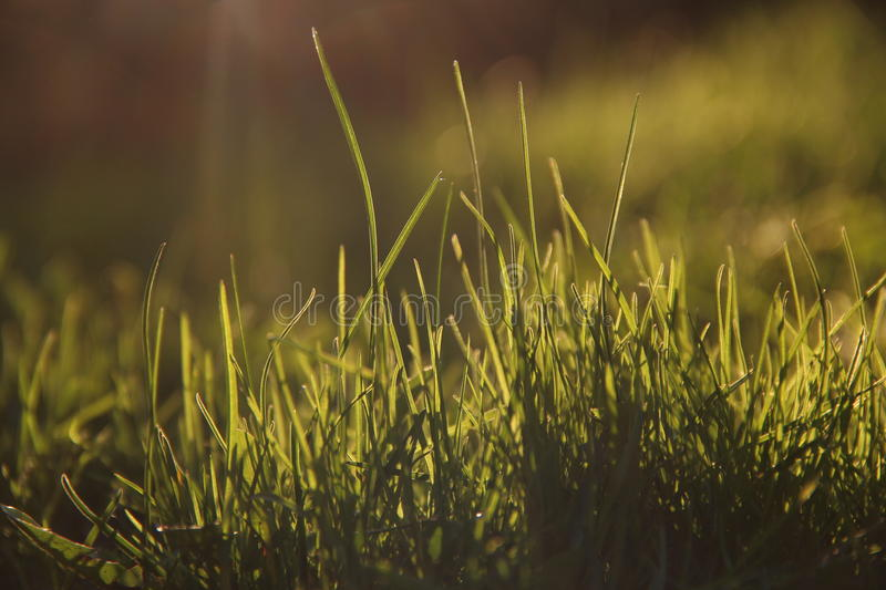 Spring grass royalty free stock photography