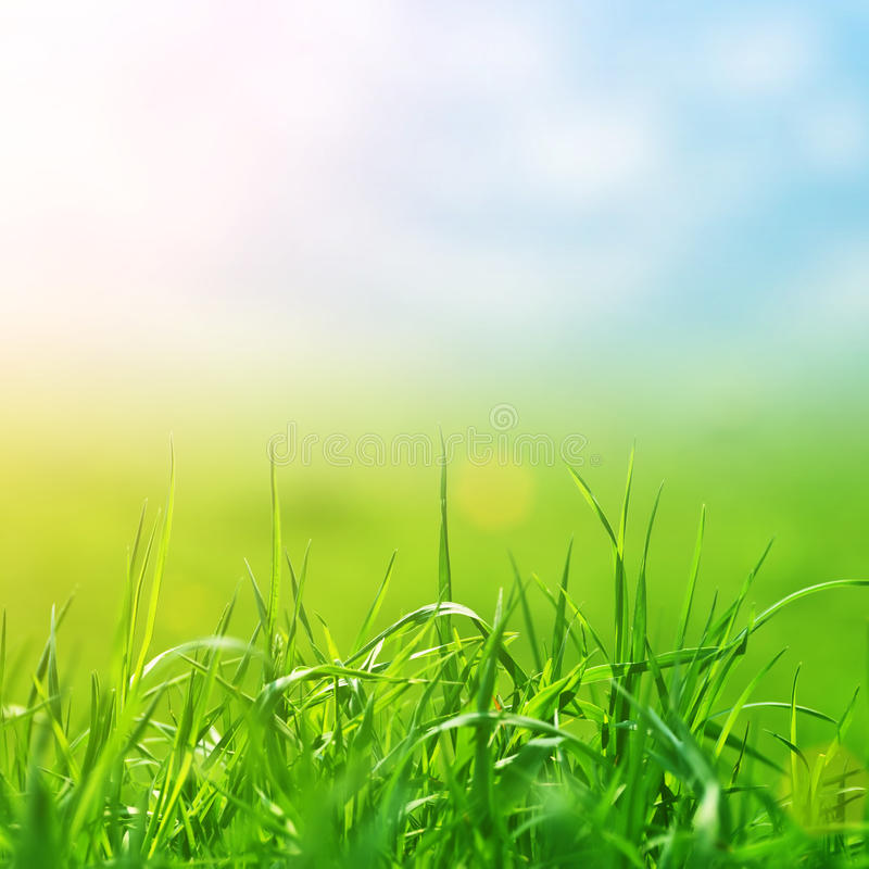 Spring grass in sun light and defocused sky royalty free stock image