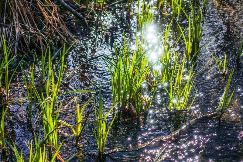 Spring grass and water. Shinning royalty free stock photo