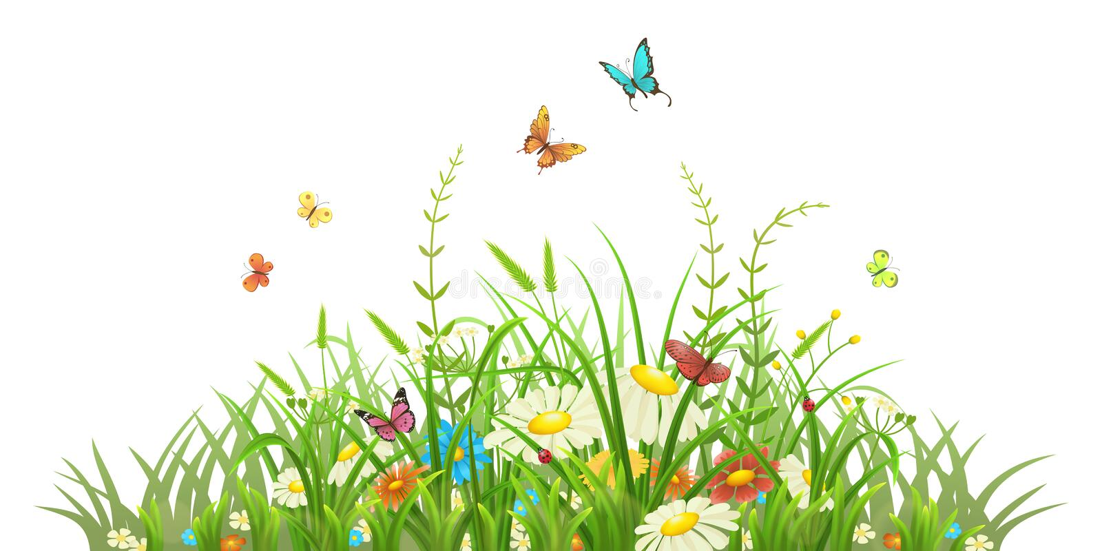 Spring green grass with flowers. And butterflies on white background