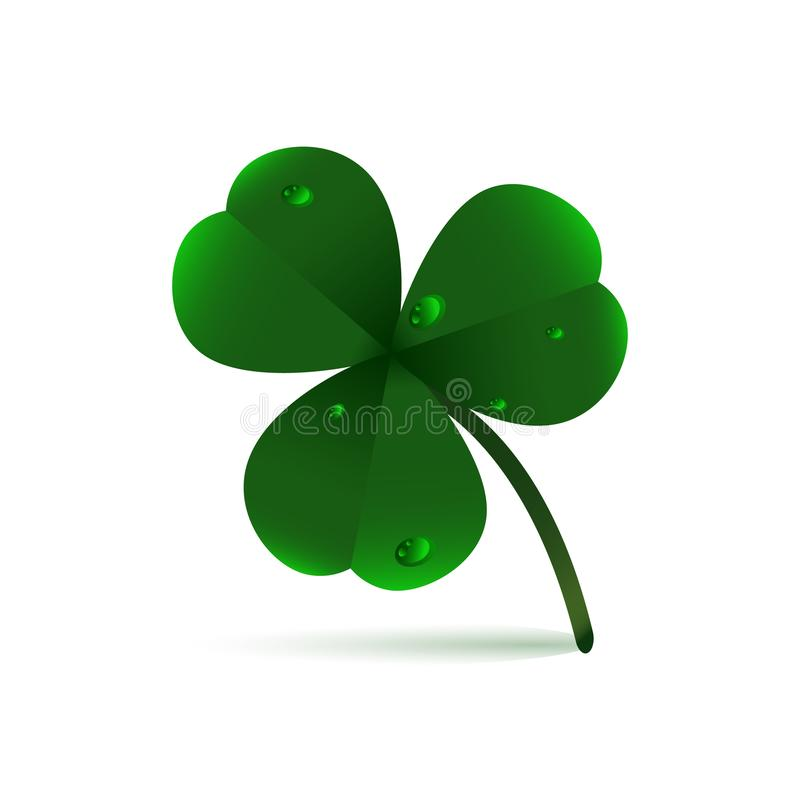 Spring green plant fhree-leafed clover with dew, raindrops or waterdrops on white background. St. Patrick`s day,, Saint, Patrick,. Holiday, nature, good luck royalty free illustration