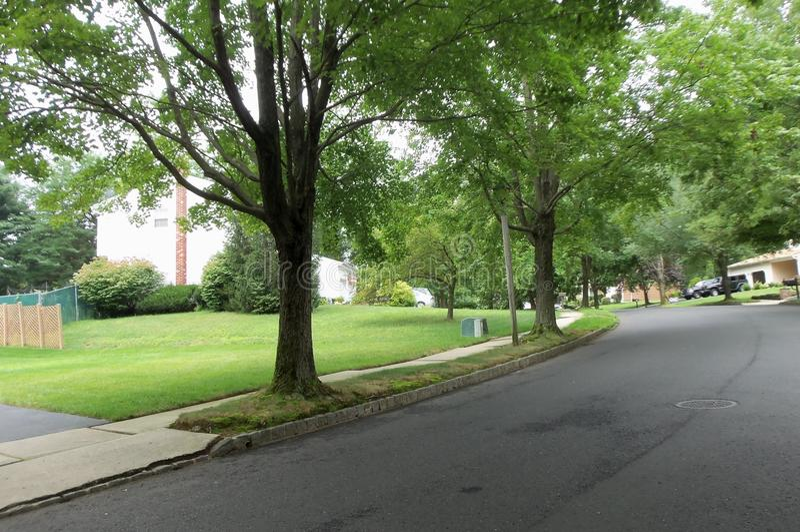 Spring green in the suburbs, peaceful street stock photos