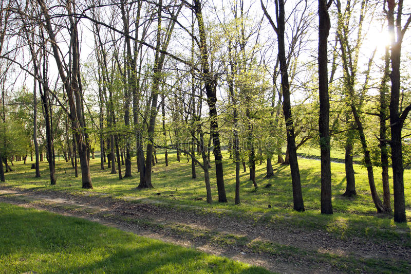 Download The spring green wood stock image. Image of landscape - 24688585