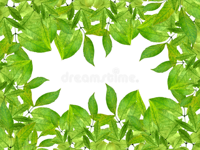 Spring greens isolated. Foliage. Deciduous ornamental. Frame from green leaves, isolation on a white background without shadows. Background spring. Ornament royalty free stock image