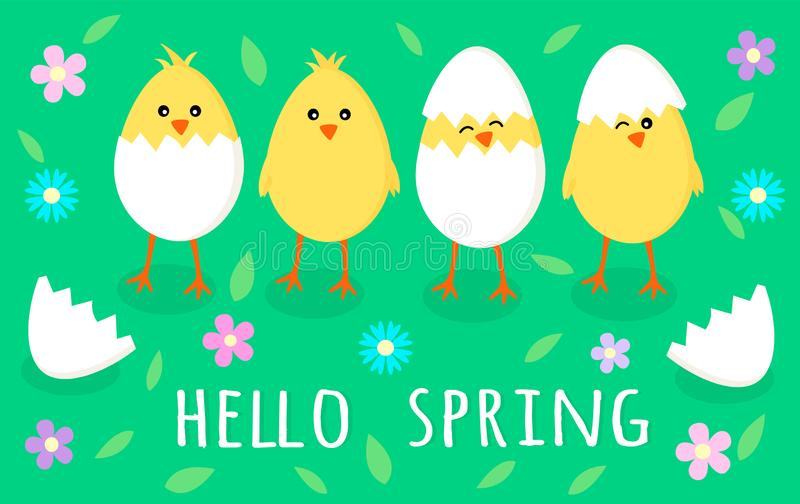Spring greeting card with four cute little yellow chicks in cracked eggs, egg shell, flowers and leaves with sign Hello royalty free illustration