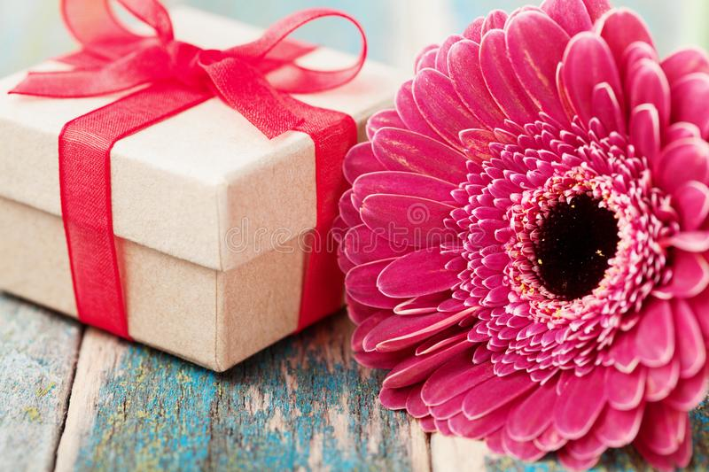 Spring greeting card from single beautiful gerbera daisy flower and gift or present for mother or womans day on wooden table royalty free stock photography