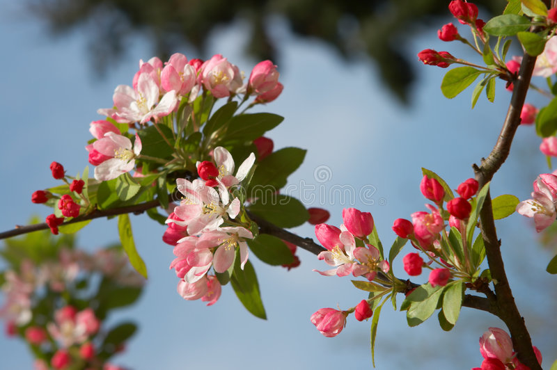 Download Spring has arrived stock photo. Image of pastel, anemones - 8645706