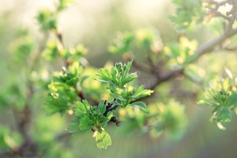 Spring has arrived, nature is awake - spring leaf spring leaves stock image