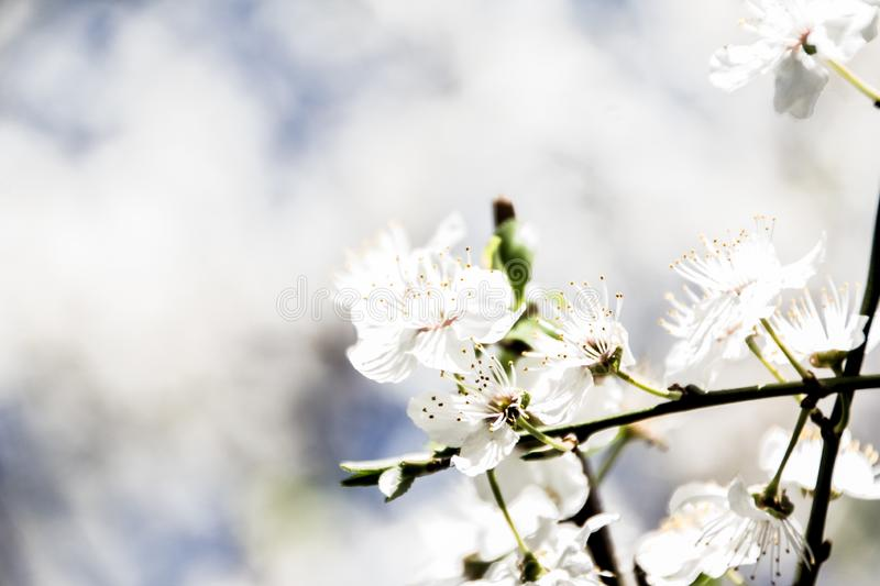 Spring has come in Rassia. Spring has come. beautiful flowers. spring mood. joy. flowering. beauty around us. macro photography stock photos