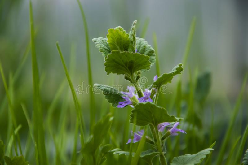 Spring has come, plants are flourishing. stock photography