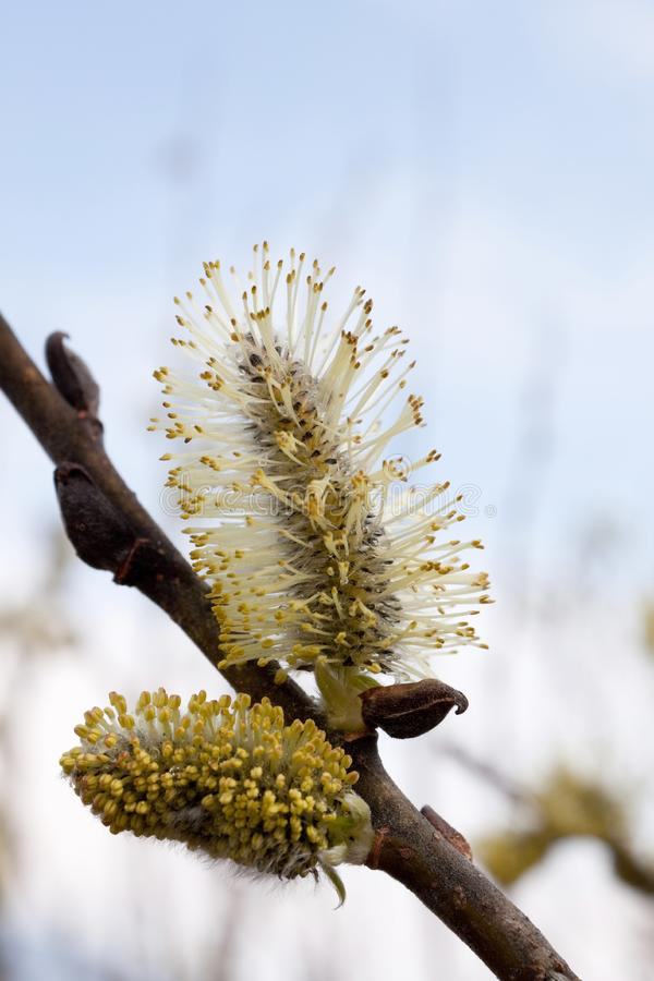 Download Spring Has Come To Moscow 3 Stock Image - Image of smell, spring: 14000735