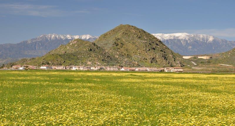 Spring in Hemet, California. Flowers are in bloom in Hemet, California with snow covered Mount San Gorgonio rising beyond the town stock image