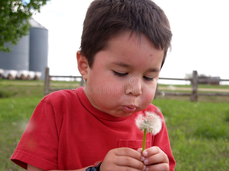 Download Young Boy Blowing A Dandelion Stock Image - Image of child, blowing: 2418851