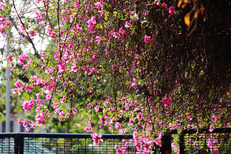 Spring is here! stock photography