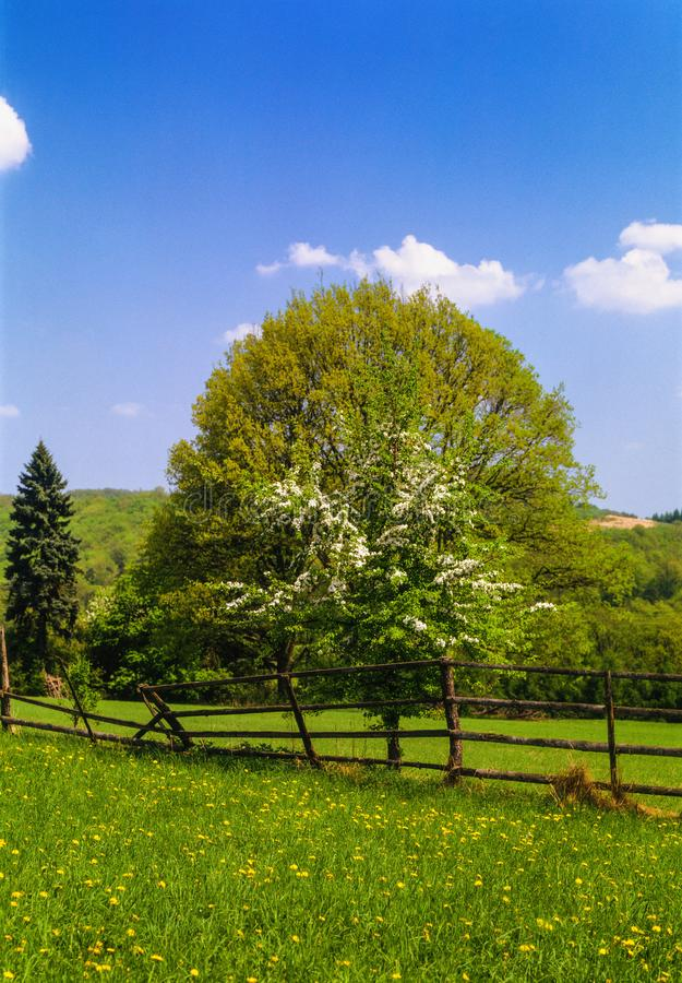 Spring is here. Illustrations, sky with clouds,wood fence,blooming meadow,tree in Blossom royalty free stock image