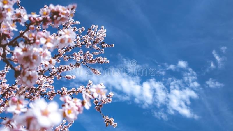 Spring is here. Prague, Czech Republic royalty free stock images