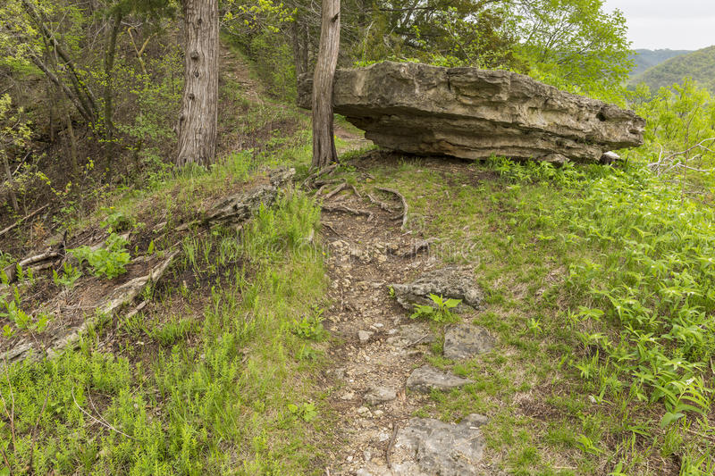 Spring Hiking Trail Scenic. A hiking trail in the woods during spring stock image
