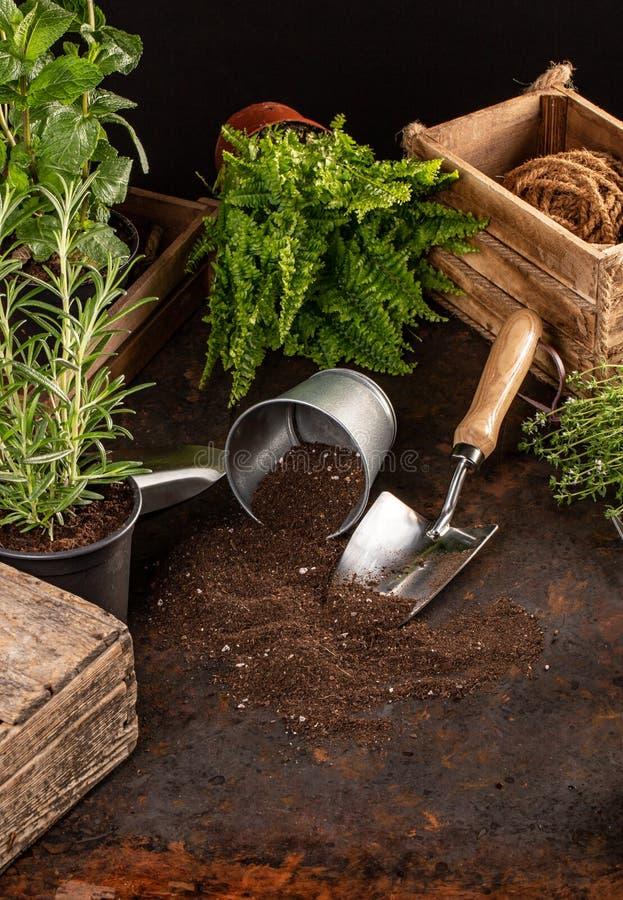 Spring hobby garden works concept stock photo