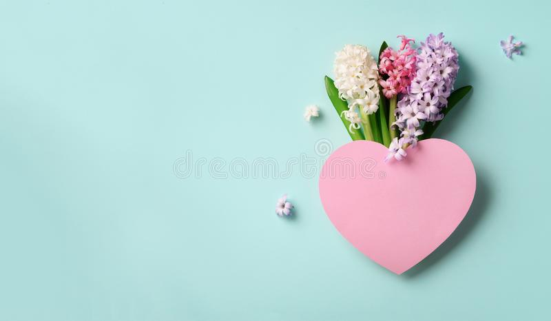 Spring hyacinth flowers and pink paper heart on blue punchy pastel background. Banner with copy space. Spring, summer or garden stock photo