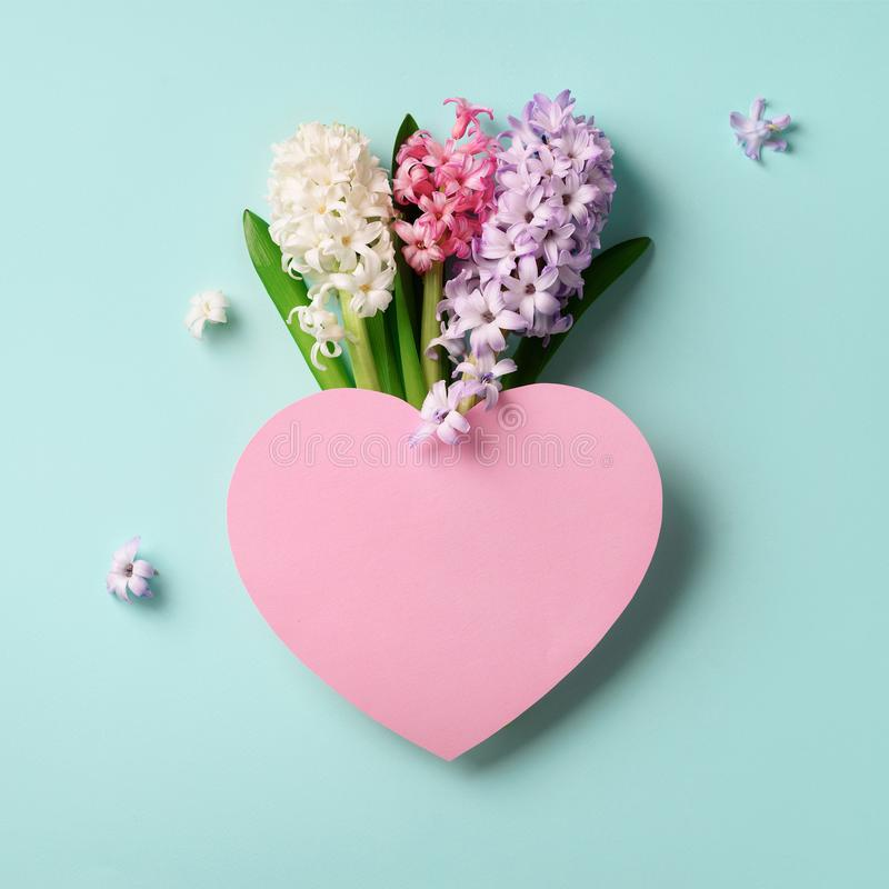 Spring hyacinth flowers and pink paper heart on blue punchy pastel background. Square crop. Spring, summer or garden concept. royalty free stock photo