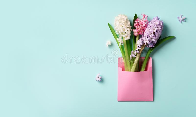 Spring hyacinth flowers in pink postal envelope over blue background with copy space. Top view, flat lay. Banner. Spring, summer royalty free stock photos