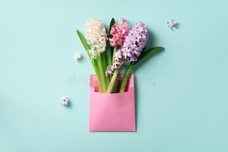 Spring hyacinth flowers in pink postal envelope over blue background with copy space. Top view, flat lay. Banner. Spring, summer royalty free stock images