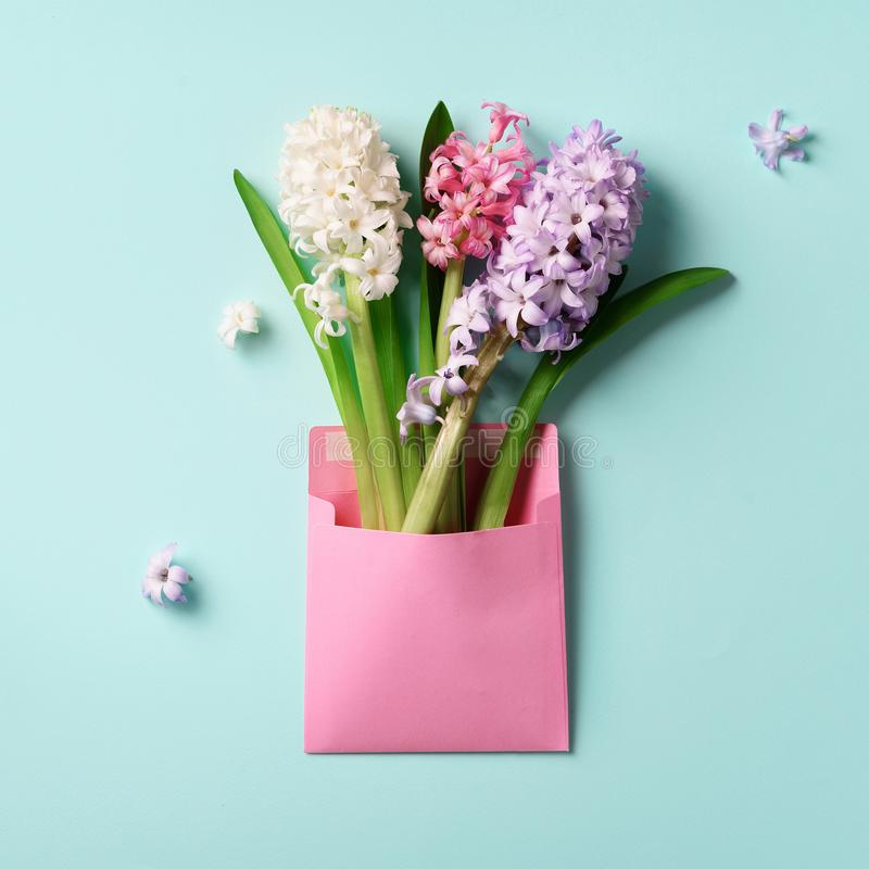 Spring hyacinth flowers in pink postal envelope over blue background with copy space. Top view, flat lay. Square crop. Spring, royalty free stock photo