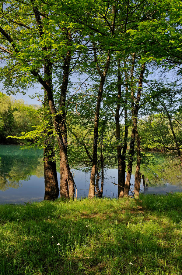 Free Spring In The Nature Stock Photo - 35943760