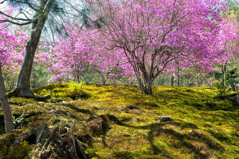 Spring in Japan stock image