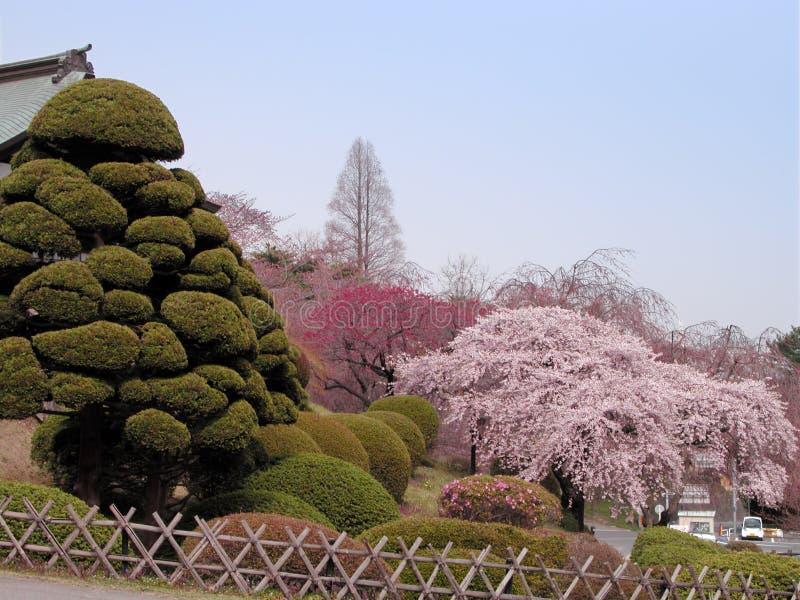 Spring Japanese garden stock photography