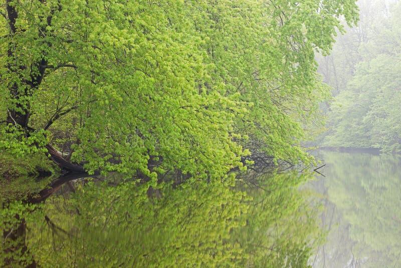 Spring, Kalamazoo River stock photo