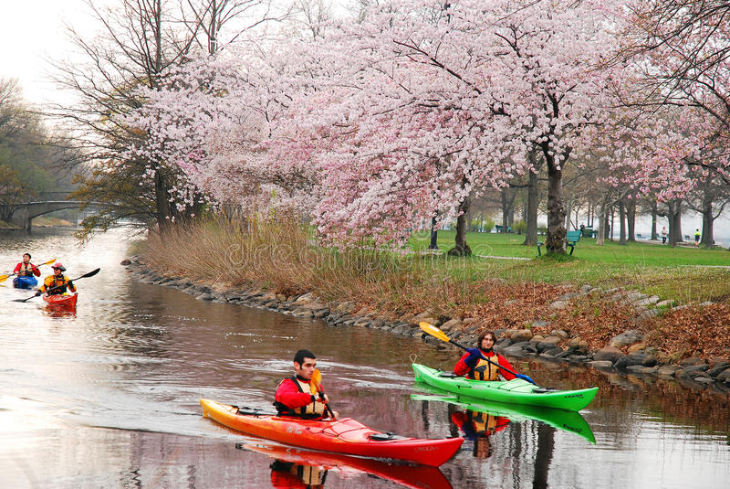 Spring Kayaking in Boston`s Esplanade royalty free stock images