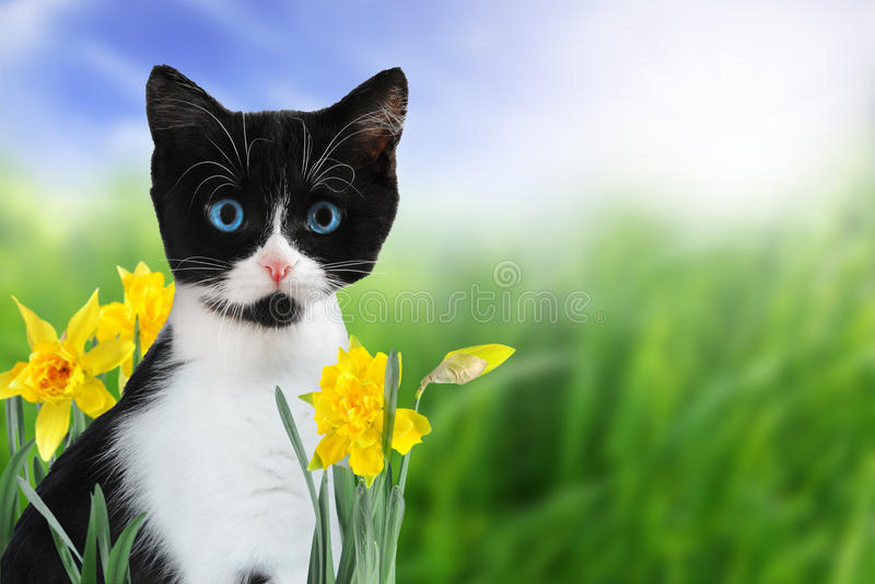 Spring kitten stock photo