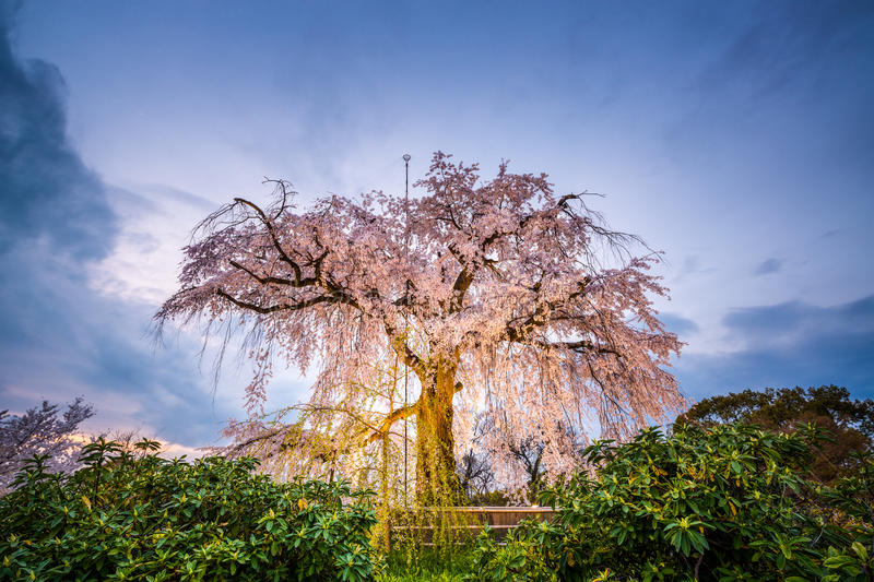Spring in Kyoto stock images