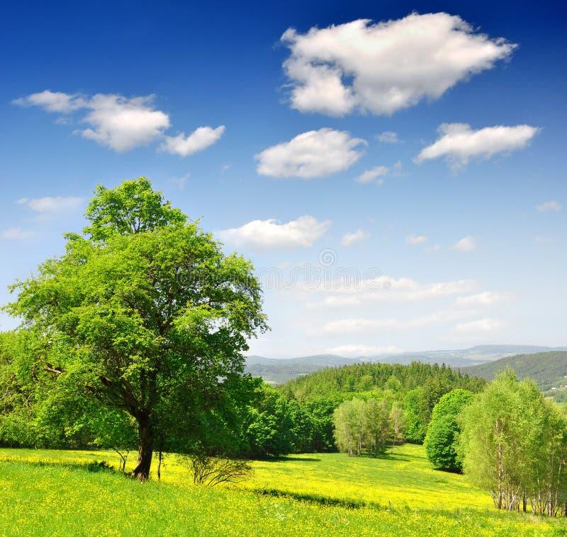 Spring Landscape Stock Images