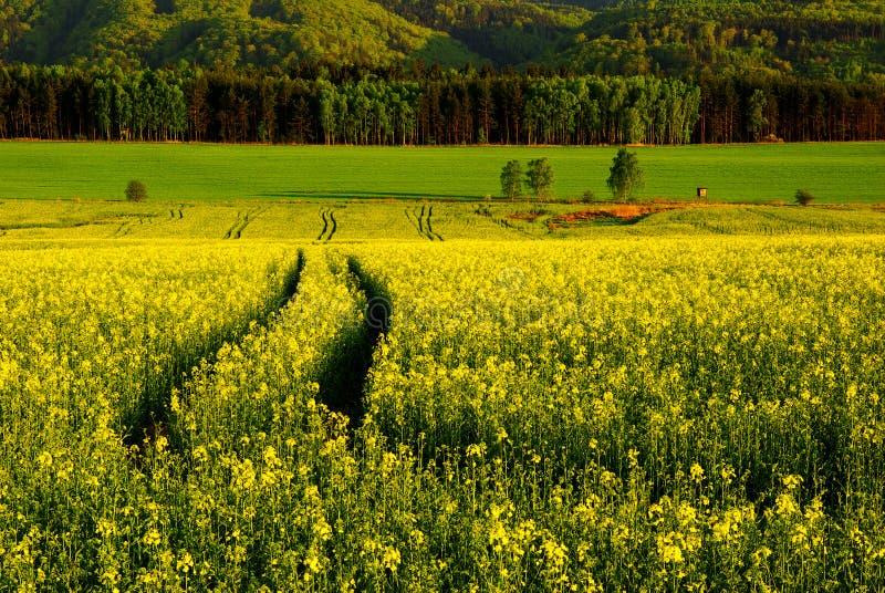 Download Spring landscape stock photo. Image of april, agronomy - 9579470