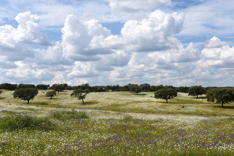 Spring landscape of Alentejo landscape between the village of Fl. Spring landscape of Alentejo landscape between the village of Redondo and Vila Vicosa, Alentejo stock photos