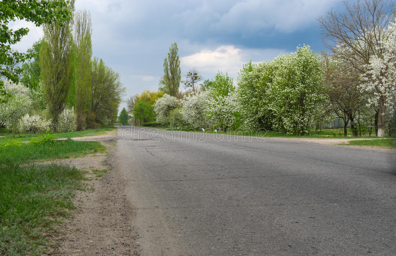 Spring landscape with asphalt road and flowering fruit trees on the roadside. Through Okhtyrka - small city in Sumskaya oblast, Ukraine stock photos