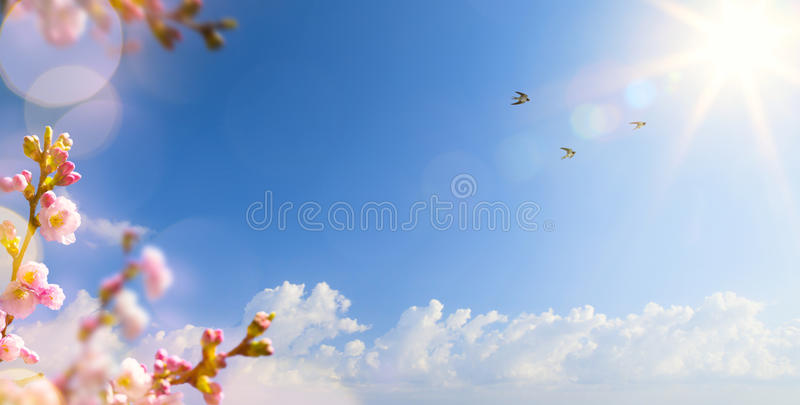 Spring landscape background with flying birds and Sprin royalty free stock photography