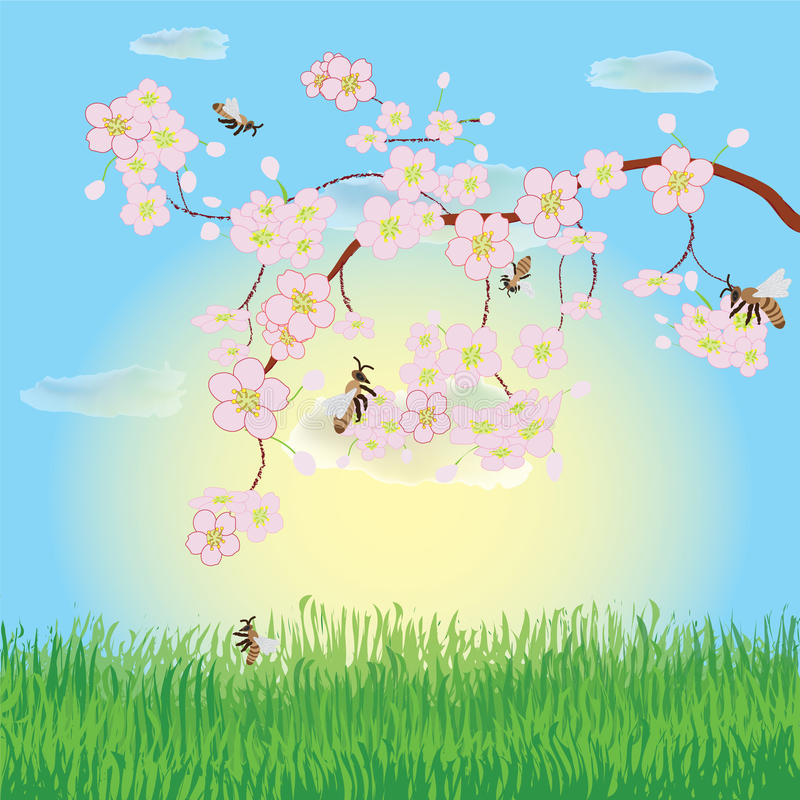 Spring landscape with blooming cherry