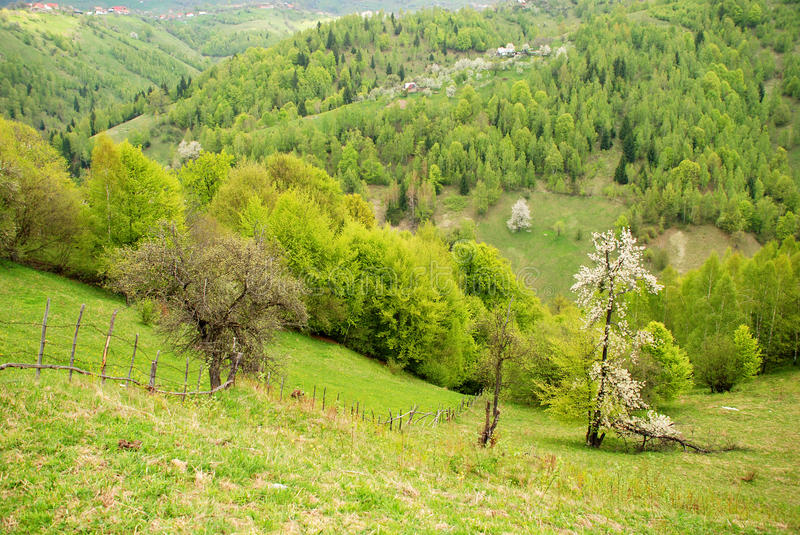 Spring landscape with blossomed tree. Beautiful hills with green forest, beautiful valleys and blossomed trees royalty free stock image