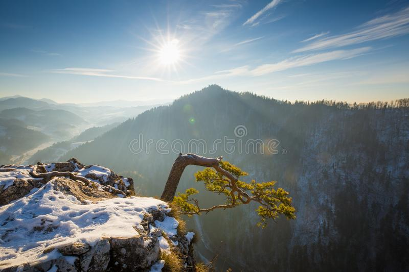 Pieniny mountains in Poland. Spring landscape with clear blue sky and sun over mountain summit. Pieniny mountains in Poland, Sokolica. Curved pine tree on rock royalty free stock images