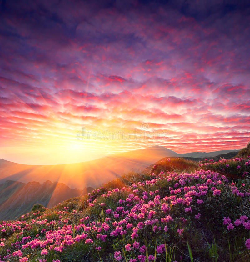 Spring landscape with the cloudy sky and Flower stock image