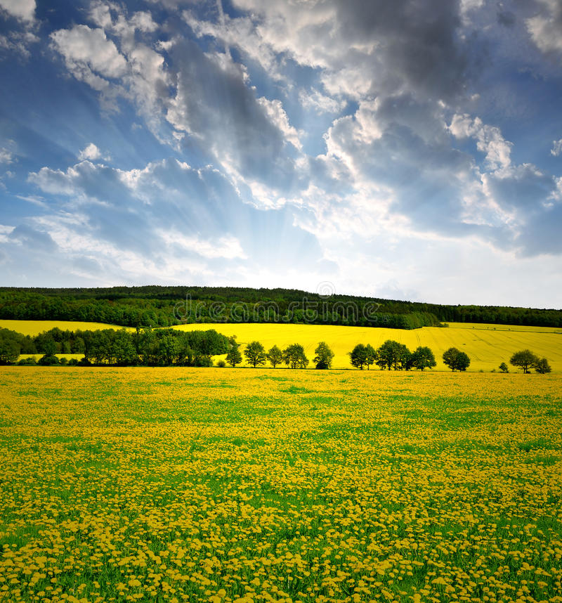 Download Spring landscape stock photo. Image of field, clear, cloud - 41896656