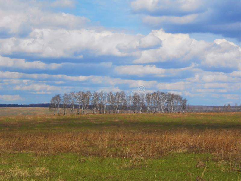Spring landscape in the field with birches and clouds. Landscape in start of the spring in field with young and dry grass and plants and group of birches on the royalty free stock images